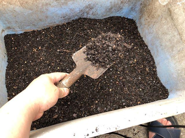 今日ふるいにかけたコンポストがこちら。今回は我ながらうまくいったぞ!温度上昇も続けていて土のいい香りがします。