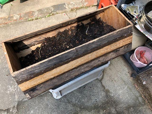 完成した木製コンポストも今日から始動です!思ったより回しにくいぞ、、これはちと改善の余地ありだなあ