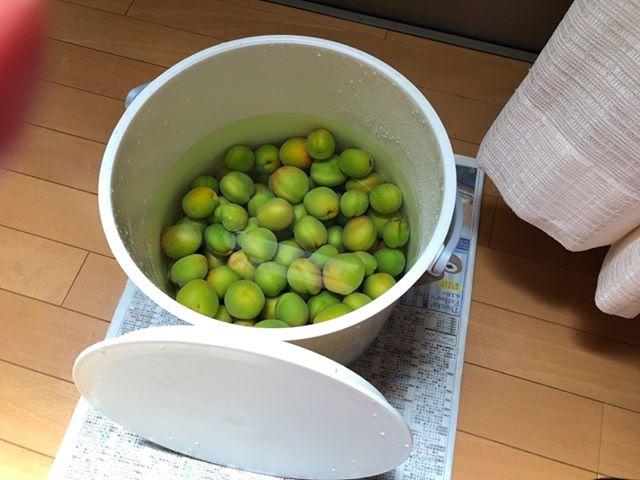 こちらは今日収穫した雨の実です。毎年たいしてお世話していないのに、梅は大量にとれます。ありがたや〜( ^ω^ )