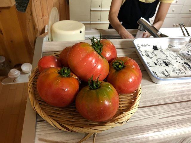 7月2日の収穫です。トマトが山盛り!このペースが続くといいな