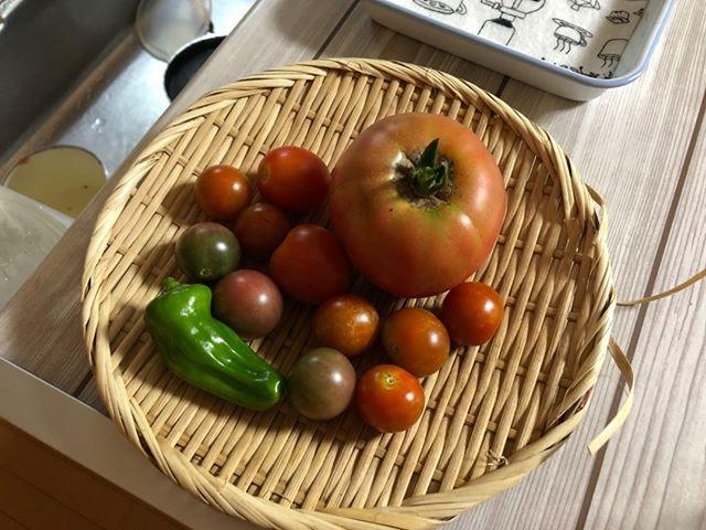 7月3日の収穫。今日はまあまあかな。それなりに取れだしたけど、ナスは取れる兆しはナッシングです。