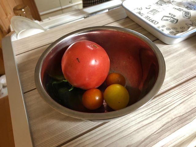 本日のトマトなり