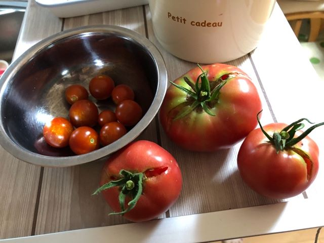 火曜日のトマト