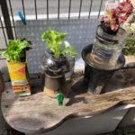 水耕栽培を試しています
